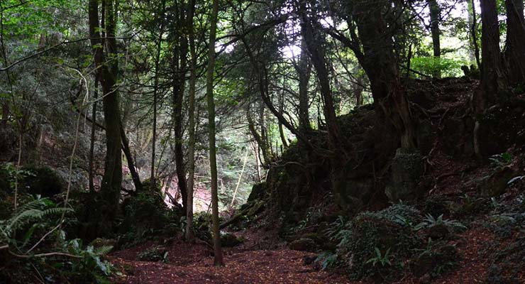 star wars locations you can visit puzzlewood