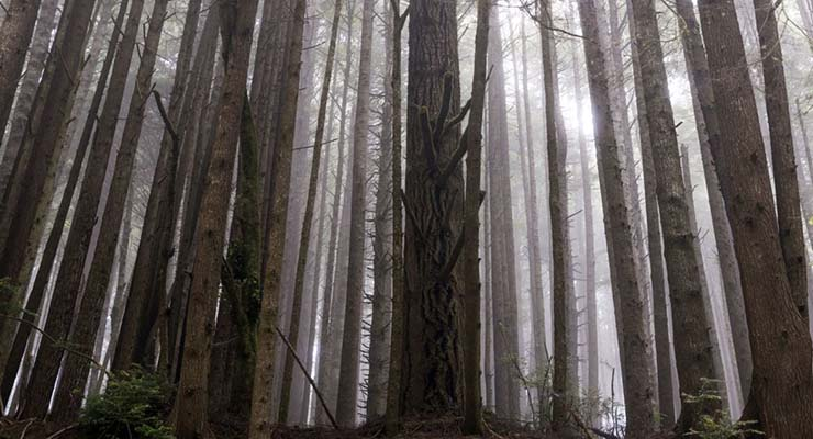 star wars locations you can visit redwood national park