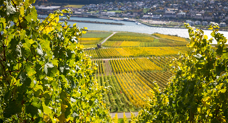 vineyard P6M3WYX
