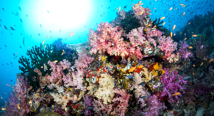 colorful underwater reef P2Q5JVJ